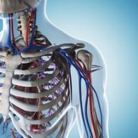 Ostéopathie et syndrome du défilé thoracique